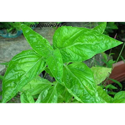 400 Basil Sweet Large Leaf Seeds Heirloom Organic Herb Non-GMO!.Ocimum Basilicum. Annual Seeds : Garden & Outdoor