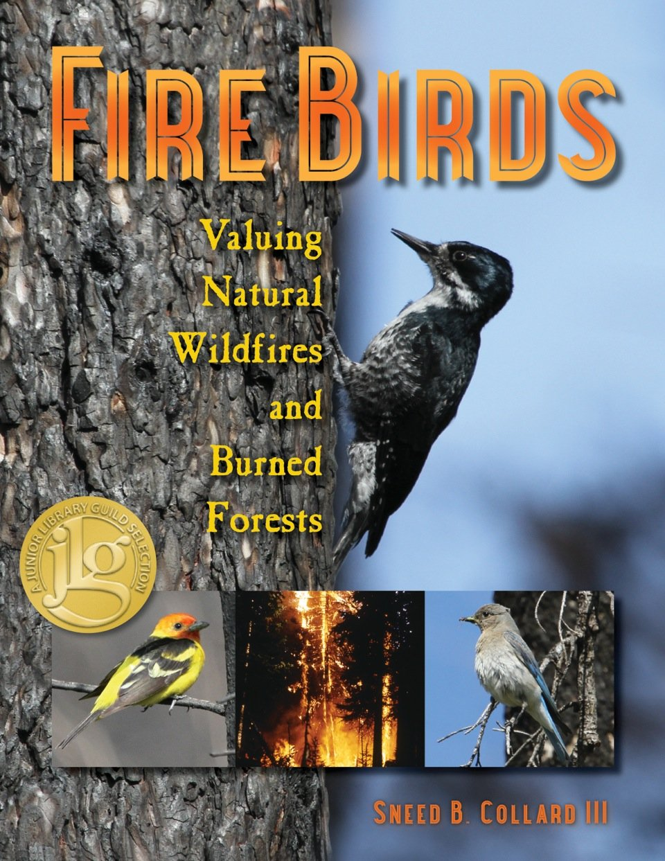 Image result for FIRE BIRDS BY SNEED COLLARD
