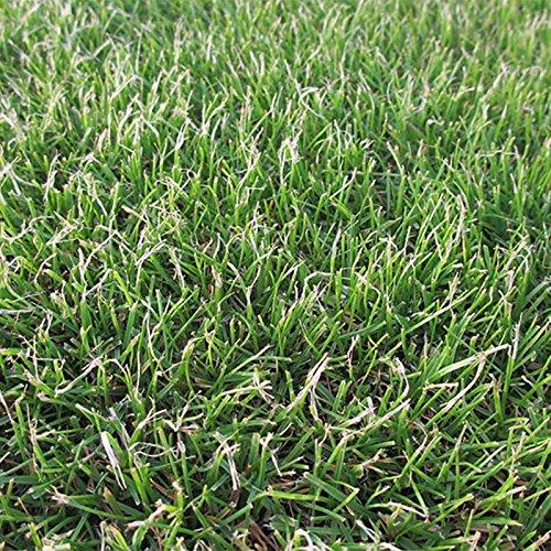 【種 10kg】 ペレニアルライグラス 普通種 芝 緑化用 [播種期:3~10月] 雪印種苗 米S代不 B06XWSKWK2