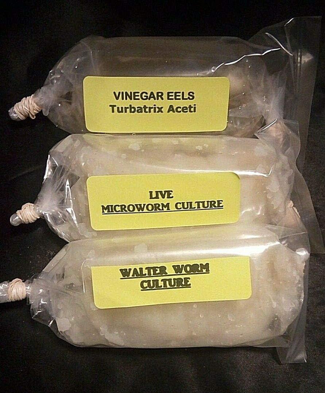 Live Culture Combo (1 Oz Each) - Microworm - Walter Worm - Vinegar EEL Cultures Fry Food Guppy Betta - B2G1