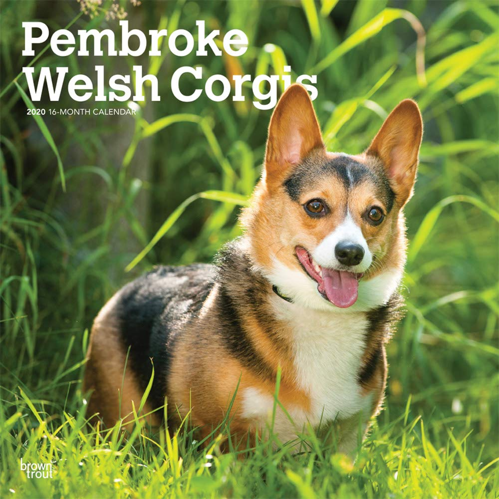 Pembroke Welsh Corgis 2020 12 x 12 Inch Monthly Square Wall Calendar, Animals Dog Breeds by BrownTrout