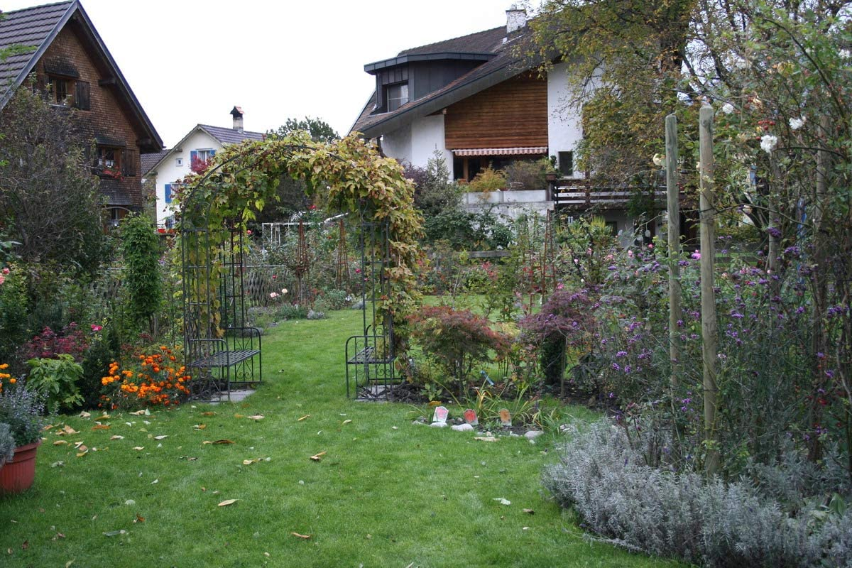 Lúpulo goldliesl – un fuerte planta en un recipiente de 5 L: Amazon.es: Jardín