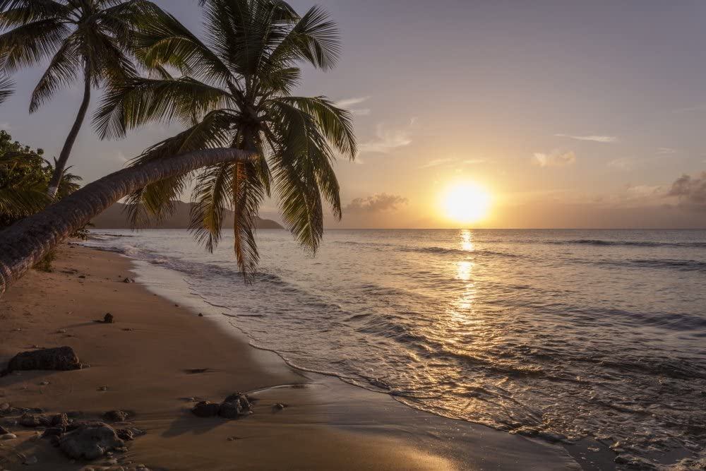 A palm tree silhouette at sunset St Croix Virgin Islands United States of America Poster Print by Jenna Szerlag Design Pics (17 x 11)