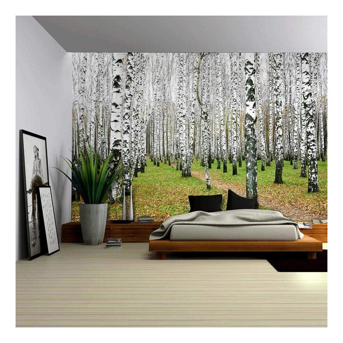 A Small Pathway in a Tall Brich Tree Forest Wall Mural - Wall Murals