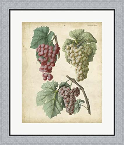 Amazon.com: Calwer Grapes II by Calwer Framed Art Print Wall Picture ...