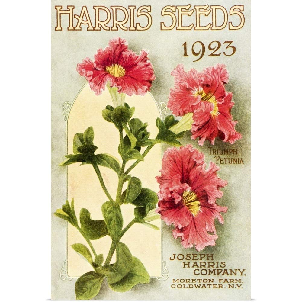 GREATBIGCANVAS Poster Print Entitled Historic Harris Seeds Catalog with Triumph Petunia Flower from 20th Century by 12''x18'' by GREATBIGCANVAS