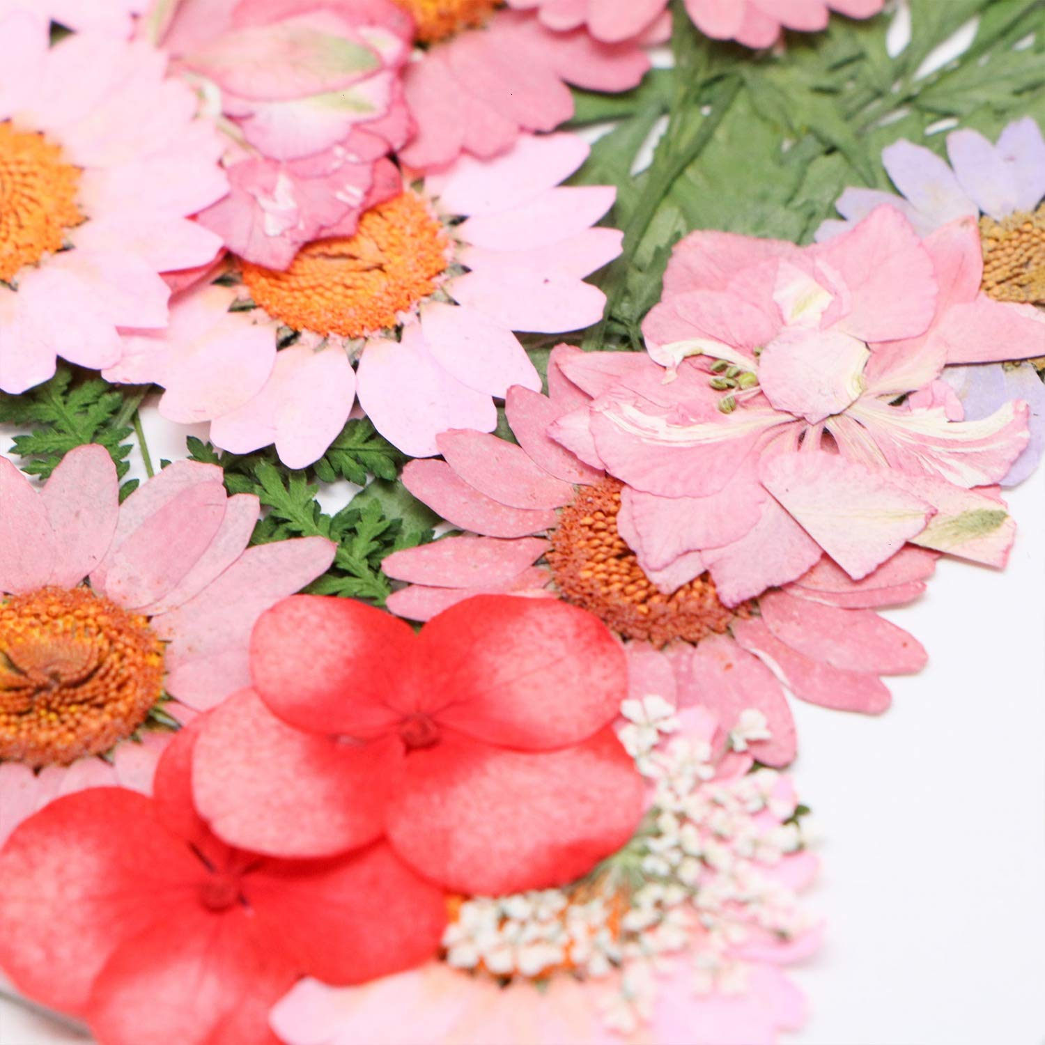 JETEHO 35 PCS Mixed Multiple Pressed Flowers Real Pressed Dried Flowers Natural Dried Flowers DIY Resin Jewelry Art Floral Decors