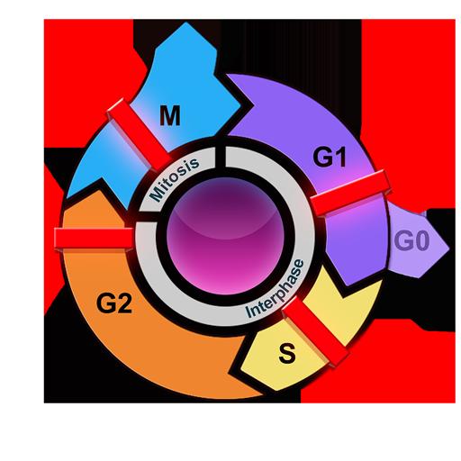 El ciclo celular eucarionte y el cáncer: Amazon.es: Appstore ...