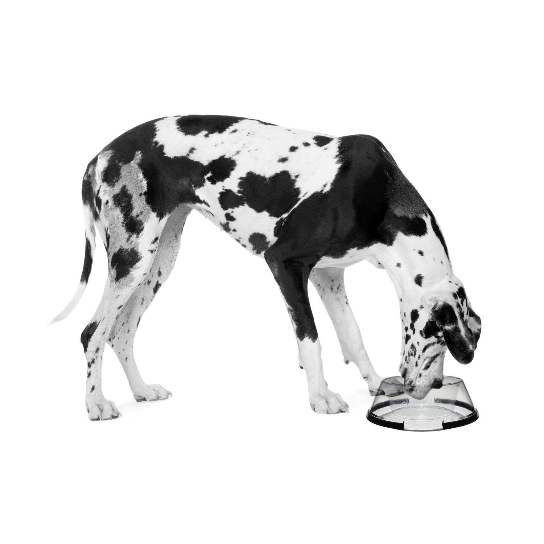 petprojekt Large Dogbol, Dog Dish, Clear by PetProjekt (Image #3)