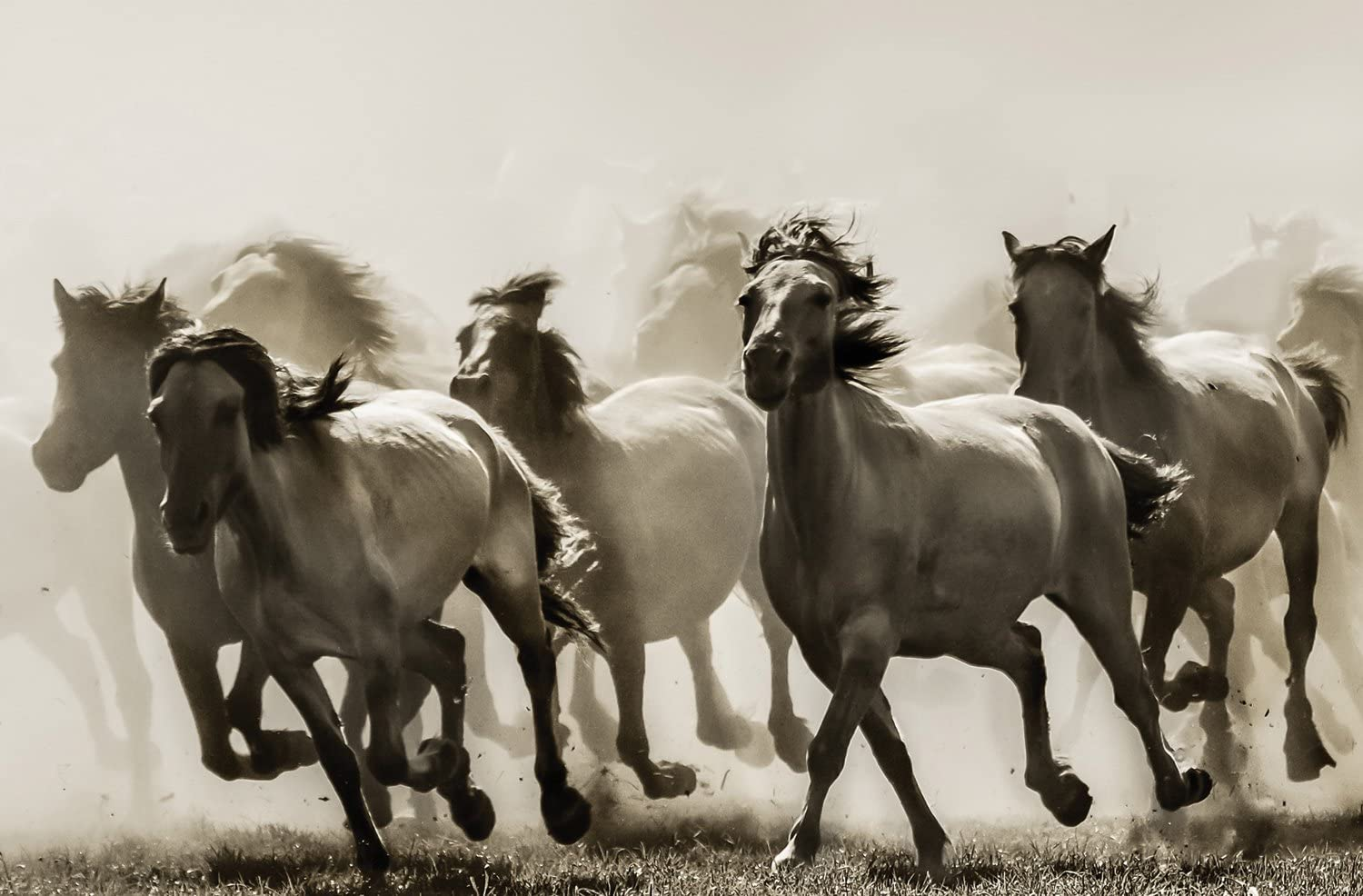 JP London Heavyweight Non Woven Art JPL and Heidi Bartsch Present Horse Wild Stampede Rustic 36in x 24in Prepasted Fully Removable Wall Poster Mural SPMURLT1X819810