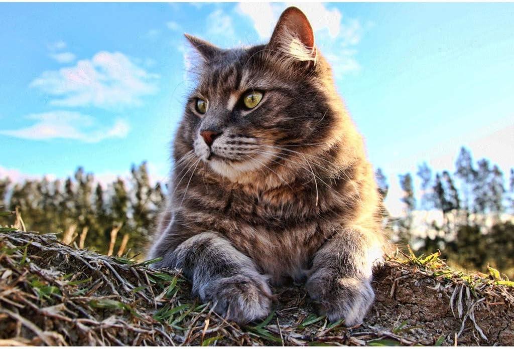 Puzzles Adorable Animales Gato Solo - 1000 Large Pieza del ...