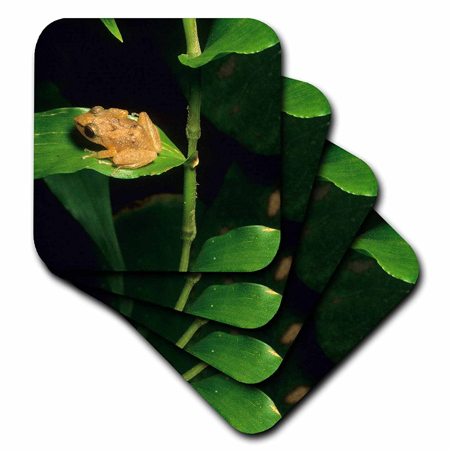 Set of 4 3dRose cst/_72316/_3 Coqui Frog on Leaf El Yunque Forest Puerto Rico-CA27 KSC0000-Kevin Schafer-Ceramic Tile Coasters