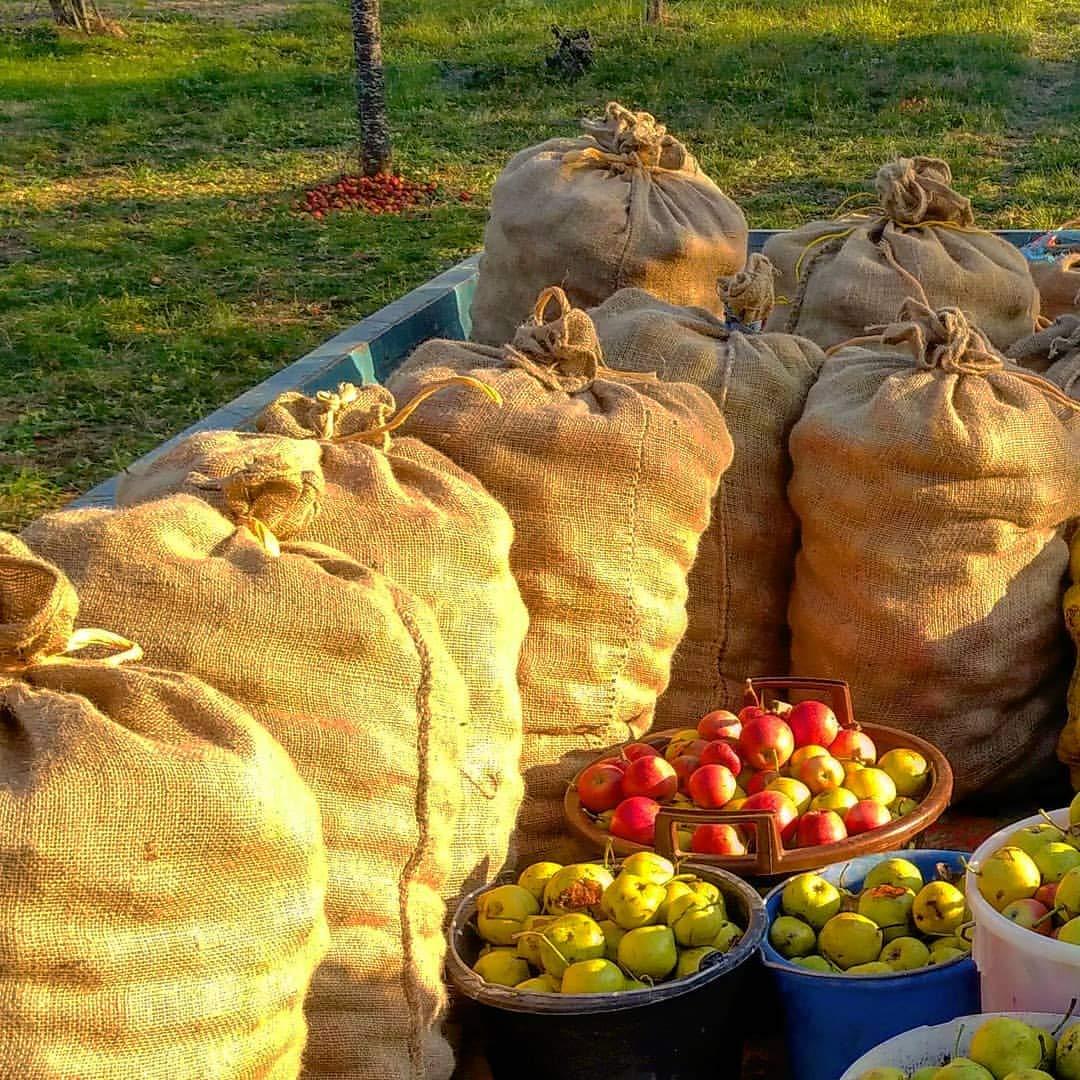 Potatoes Norjews Natural Hessian Jute Sacks Pack of 3 Hessian Bags Made of Tearproof Jute Fabric Bonus 4mm x 20m Jute Twine Burlap Sack 135 x 65cm Vegetables