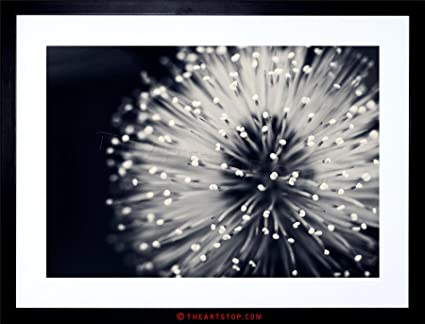 Photo nature plant flower black white beautiful home framed print f12x4247