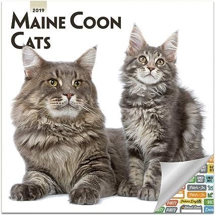 Calendario 2019 para gatos Maine Coon 2019, calendario de pared con más de 100 pegatinas de calendario (regalos para gatos de monedas de Maine, suministros de oficina): Amazon.es: Oficina y papelería