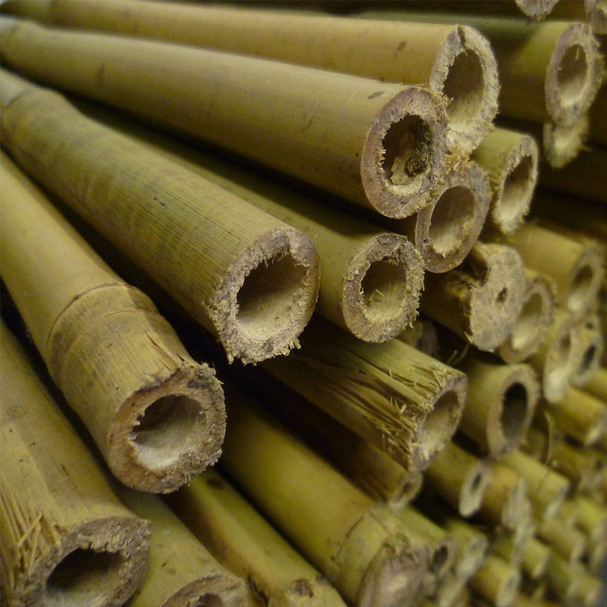 8ft Bamboo Canes 14-16mm - Pack of 50 (a308)