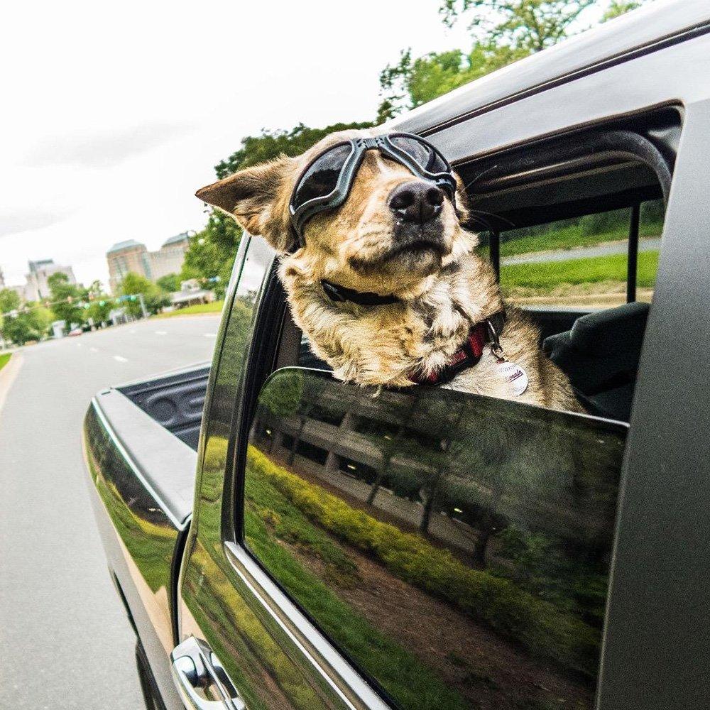 PETLESO Large Dog Goggles Sunglasses UV Goggles Goggles Golden Retriever Goggles -Black