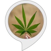 marijuanafacts