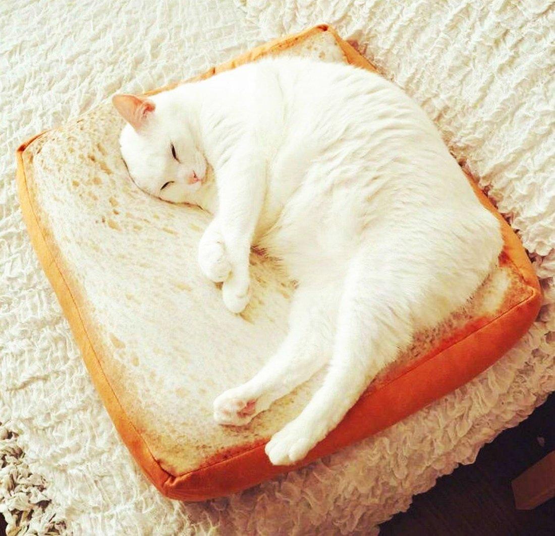 White cat sleeping on toast cat bed mat