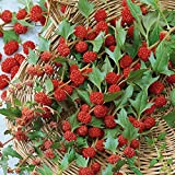 Strawberry Spinach (Chenopodium capitatum) Herbal Plant Heirloom, 340-360 Seeds