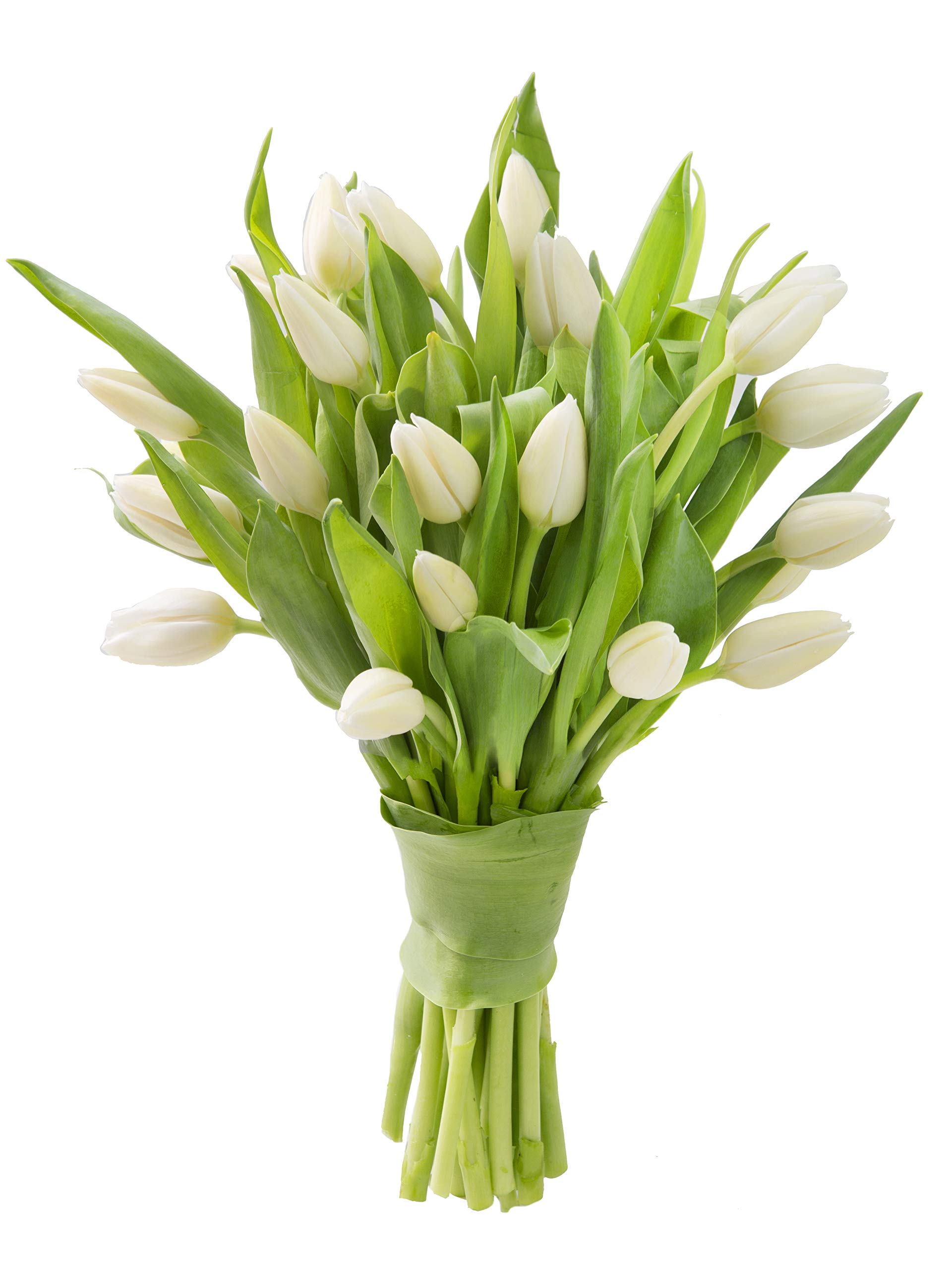 Blooms2Door 20 White Tulips (Farm-Fresh Flowers, Cut-to-Order, and Homegrown in the USA)