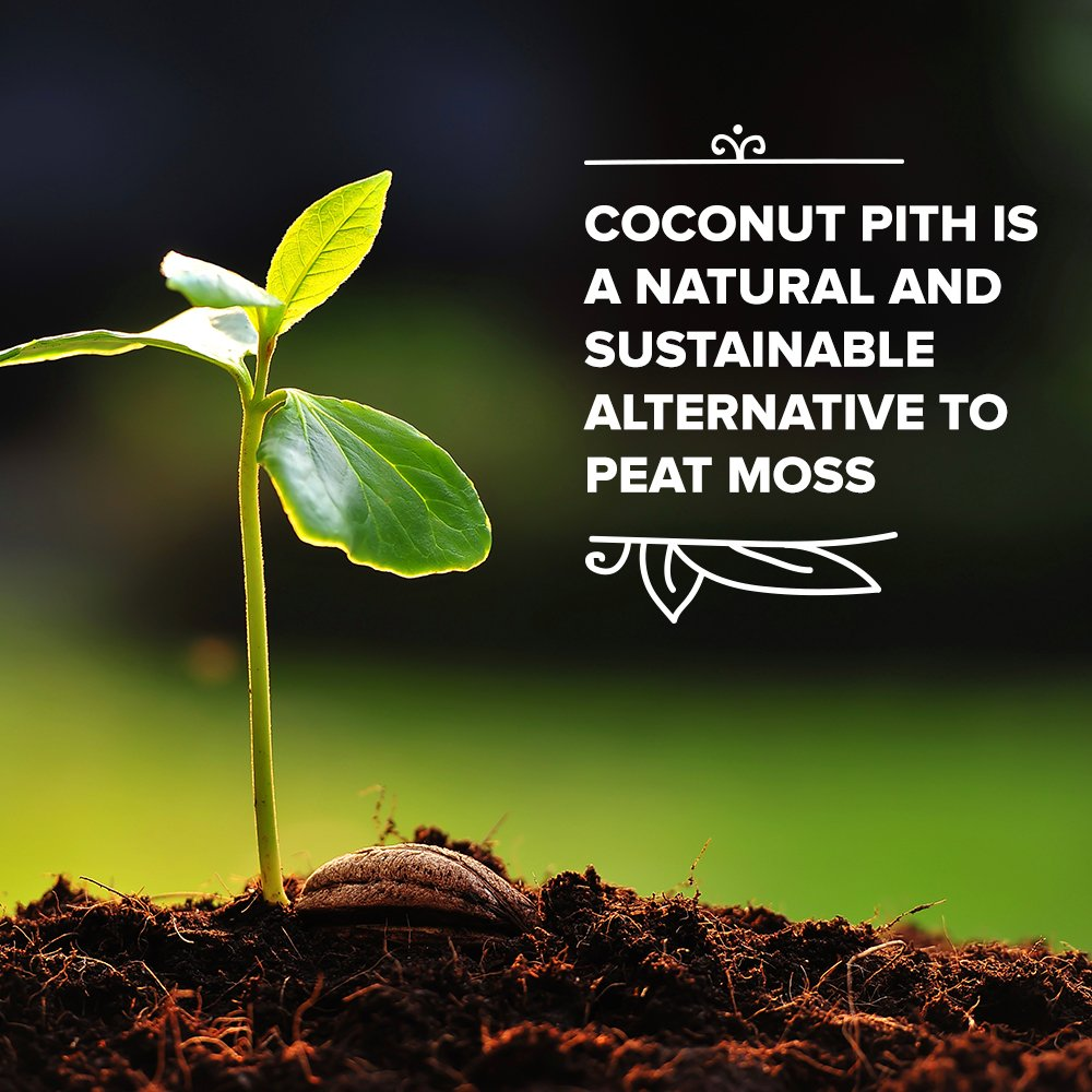 Coconut Coir Fiber - 4 Pack of Convenient Blocks - All Natural and Environmentally Friendly Coconut Peat by Triumph Plant (Image #2)
