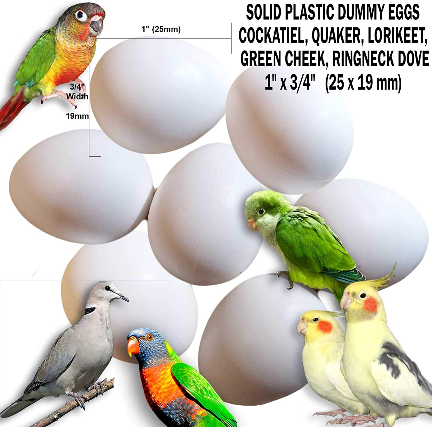 "DummyEggs Stop Laying! Cockatiel, Quaker Parrot, Green Cheek, Lorikeet, Ringneck Dove - Non-Toxic White Solid Plastic Realistic 1"" x 3/4"" / 25x19mm Fake Bird Eggs & Kits"