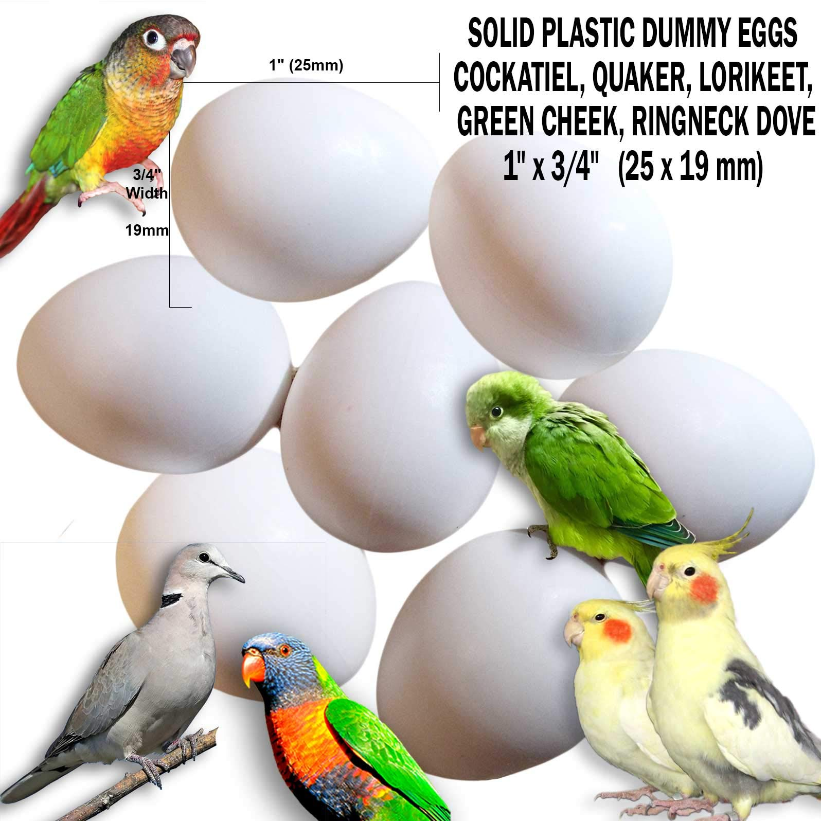 DummyEggs Fake Bird Eggs Stop Laying! Set of 21: Cockatiel, Quaker Parrot, Green Cheek, Lorikeet Ringneck Dove. White Solid Plastic Realistic 1'' x 3/4'' 25 x 19 mm (Set of 21) by DummyEggs