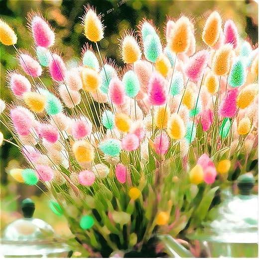 10 Stk Lila Riesen Allium  Design Giganteum Blumensamen Hausgarten Anlage Decor