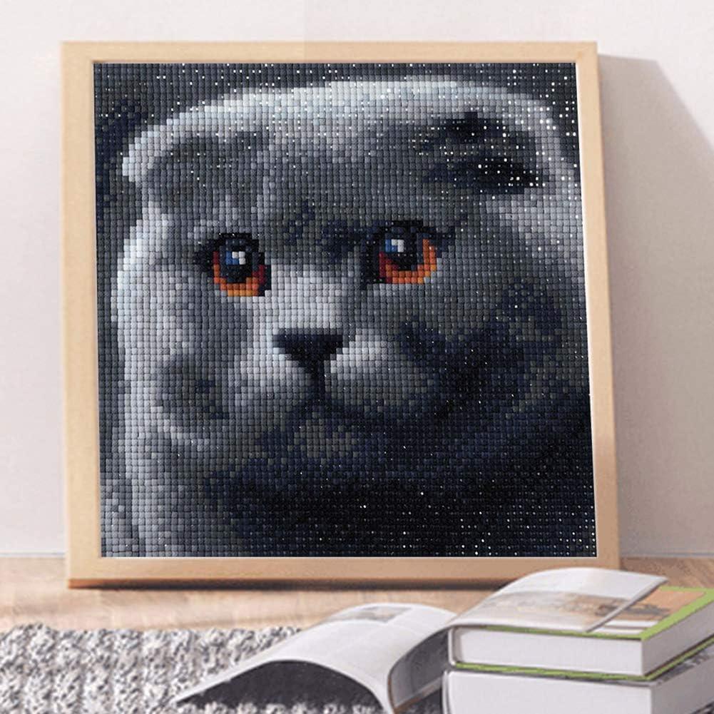 BeimYcW 25x25cm Grey Cat Full Square Resin Diamond Painting Cross Stitch Wall Rhinestone Embroidery Supply Arts Craft Canvas Wall Decor F005