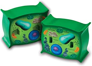 Learning Resources Cross-Section Plant Cell Model, Plant Anatomy, Science Classroom Accessories, 2 Foam Pieces, Ages 7+