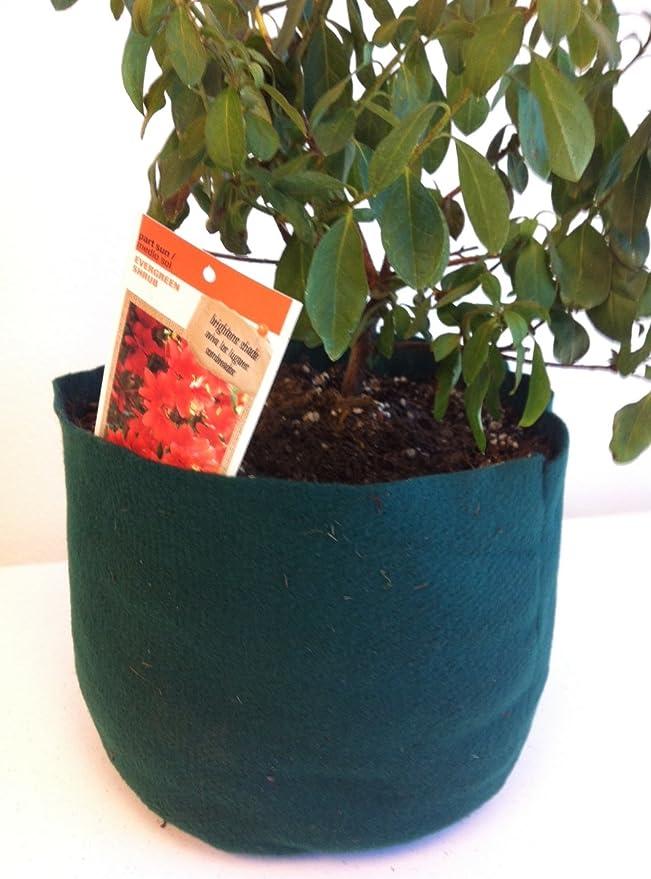 3-Gallon Kelly verde fieltro Pot (100% Material reciclado post consumo): Amazon.es: Jardín