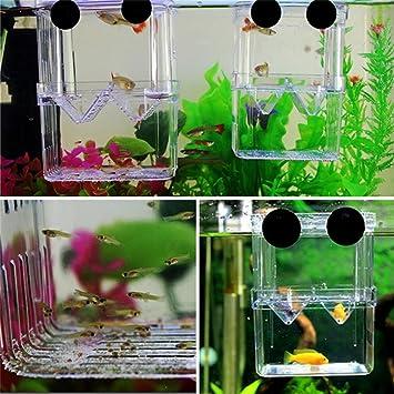 Ballylelly Fish - Caja de Incubación para Acuario con Aislamiento para la Cría de Peces (Color Transparente): Amazon.es: Productos para mascotas