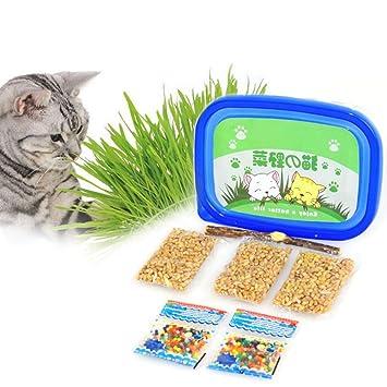Amazon   グリーンラボ 犬と猫が好きな草の栽培用セットX4個セット   グリーンラボ   お菓子・スナック 通販