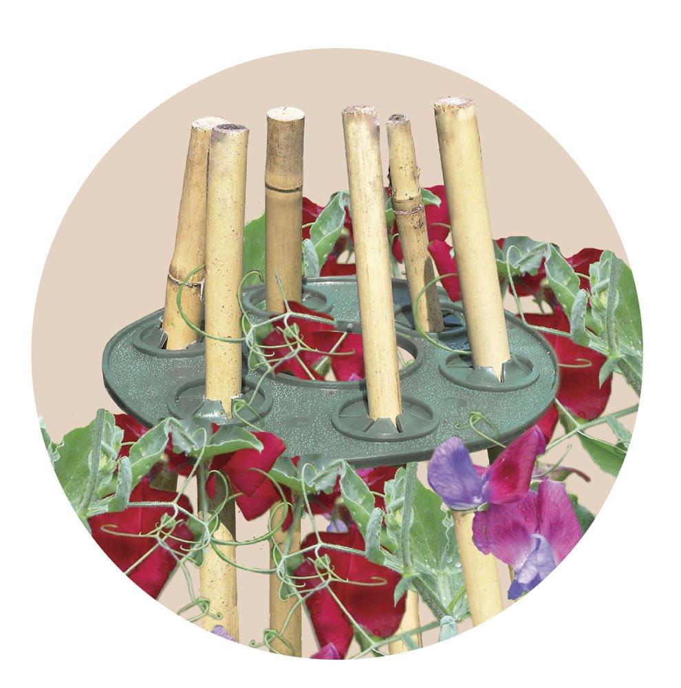 Discos de sujeción para tutores / plantas Garland (2x): Amazon.es ...
