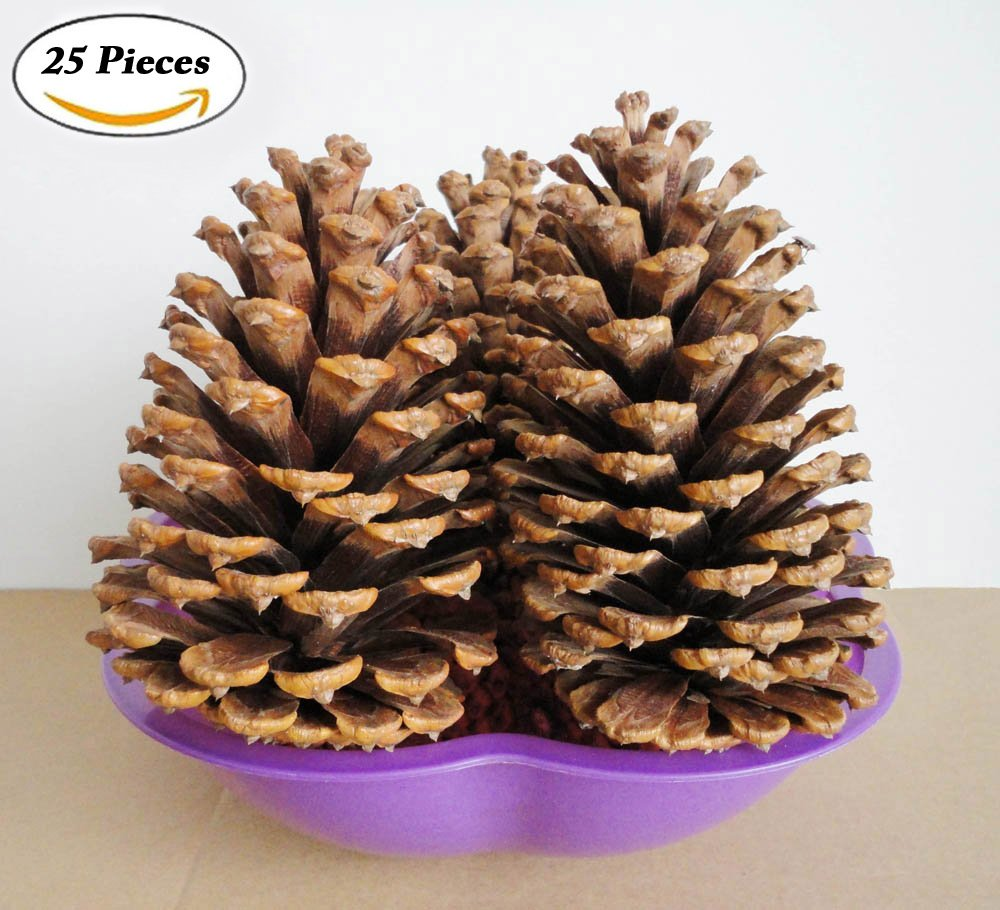 Extra Large Natural Table Top Pine Cones Set of 25