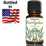 Amazon.com : Lavender Essential Oil 100% Pure ...