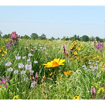 Tall Grass Meadow Mix (Mix 101), 500 Certified Pure Live Seed, True Native Seed (Northeastern US) : Flowering Plants : Garden & Outdoor