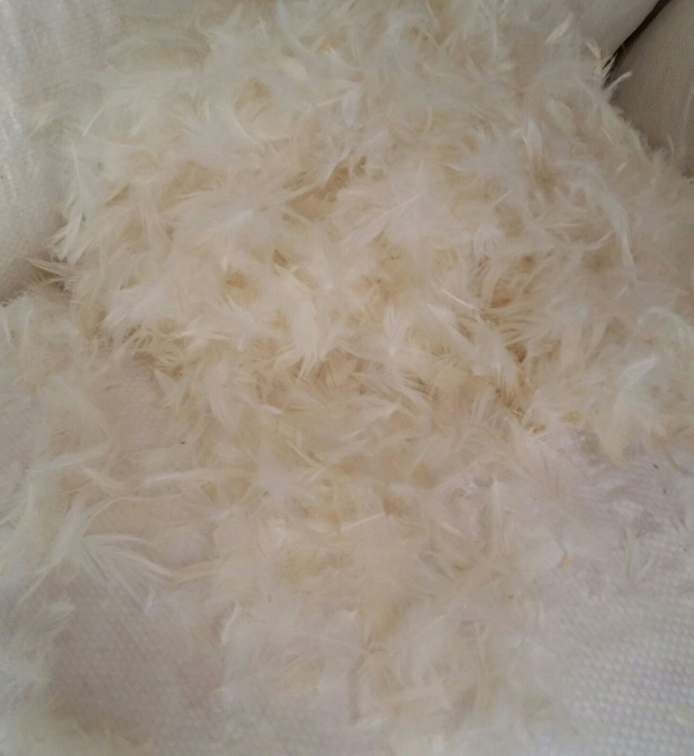 15/85 White Duck Down + Feather Stuffing & Fill – Bulk 10lb Bag – Hypoallergenic Pillow Filling, Repair, Restuff, Fluff for Couch Cushions, Comforters, Jackets – by East Coast Bedding (10 Lbs.)