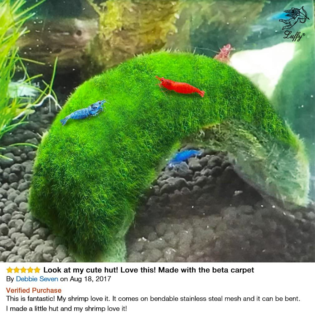 Create Legendary Lush Green Landscapes in Aquarium Unique Adorable Plants Natural Habitat for Triops//Sea Monkeys Luffy Marimo Moss Balls Perfect Desk D/écor