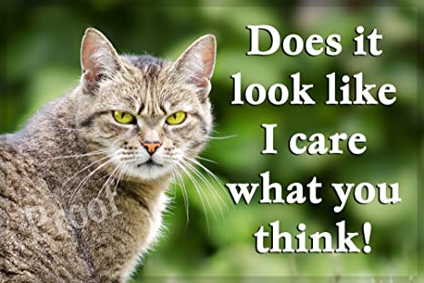 Funny de gato Cat Imán para nevera – does it look like I care What You