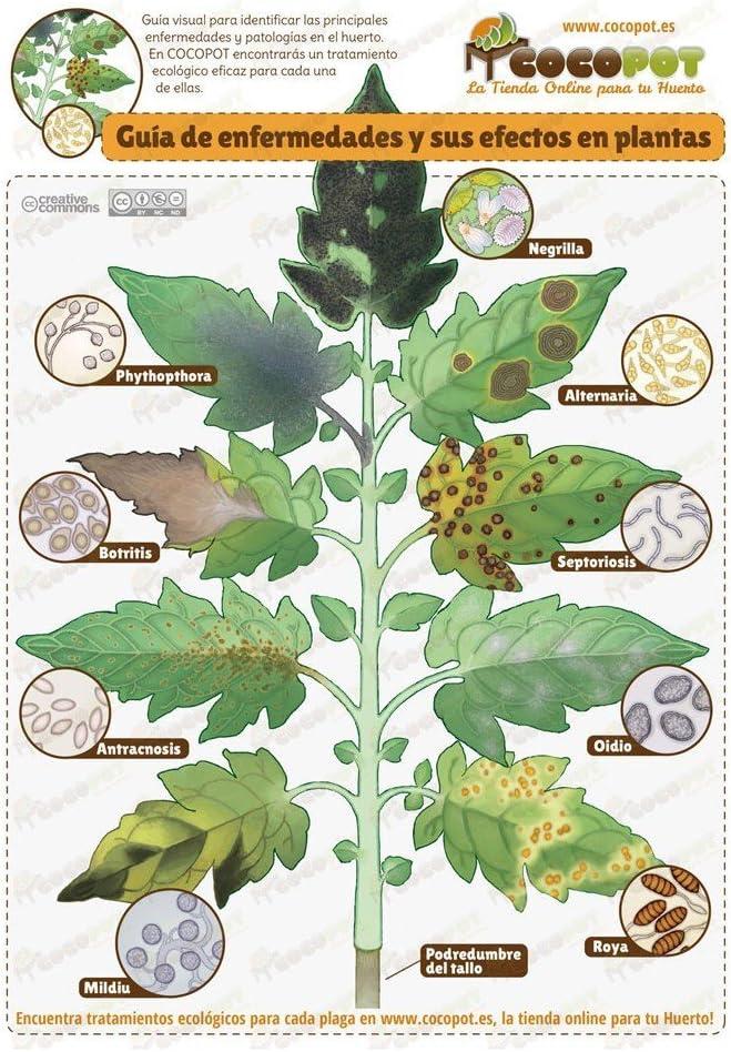 TRABE - Fungicida Nematicida Ecológico Torta Neem 450g.: Amazon.es ...