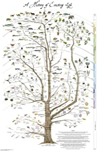 "Fairhope Tree of Life Poster Print - Science Poster Natural History of Existing Life 24"" x 36"""