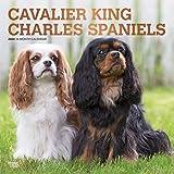 Cavalier King Charles Spaniels 2020 Calendar: Foil Stamped Cover