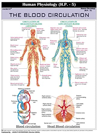 Jagruti Human Physiology The Blood Circulation Wall Education Poster ...