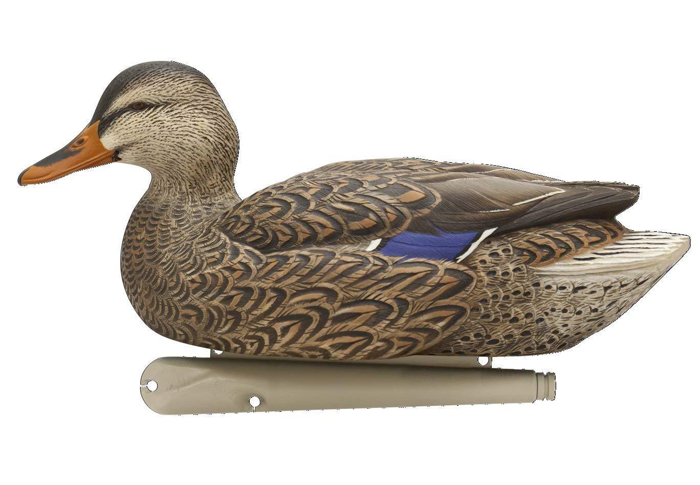 6 Pack Green Renewed AvianX Top Flight Duck Open Water Mallard Decoy