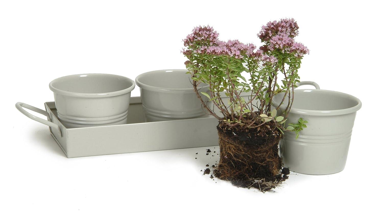 Garden Trading Pots On A Tray In Clay (Set Of 3): Amazon.co.uk: Garden U0026  Outdoors