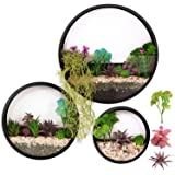 3 Pack Set Wall Planters Modern Wall Vase Succulent Planter Circle Flower Pot Metal Iron Indoor Vertical Container Wall…