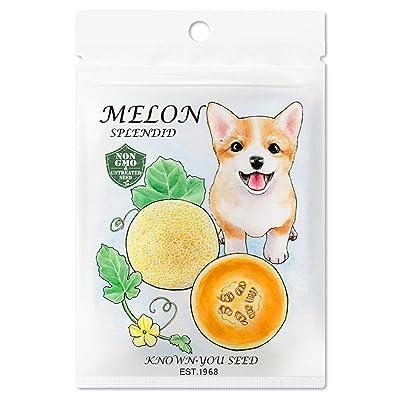 Non-GMO, Untreated Seeds, F1 Hybrid Melon Seeds, Variety: Splendid : Garden & Outdoor