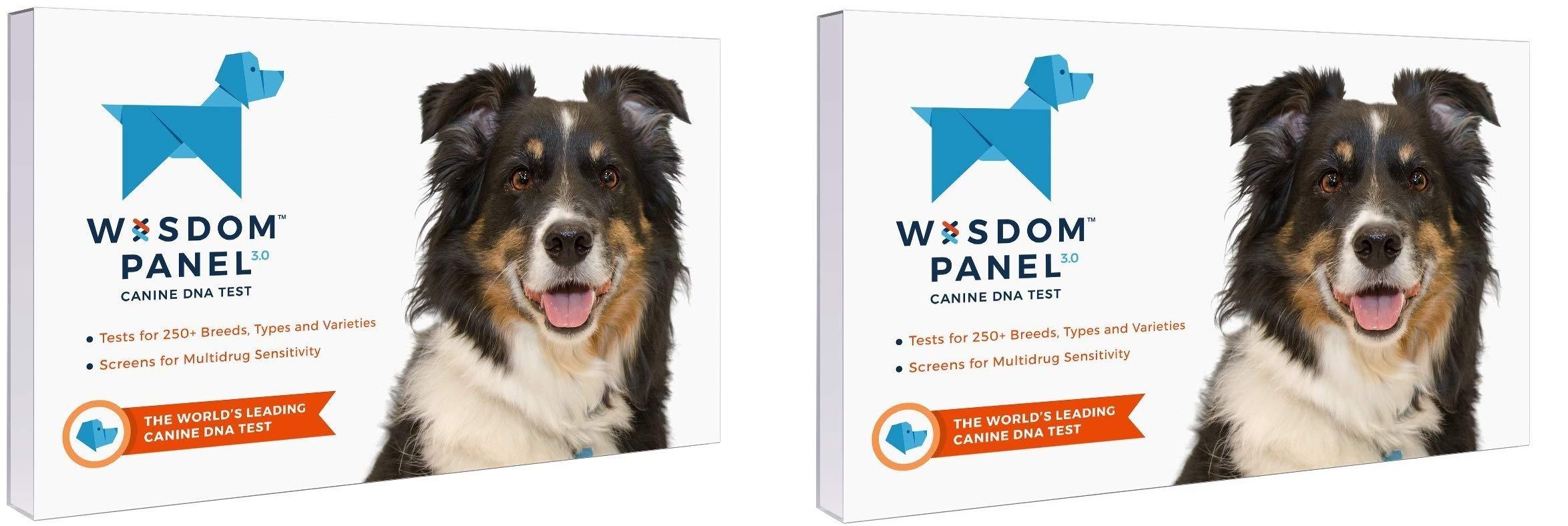 Wisdom Panel 3.0 Breed Identification DNA Test Kit (2-Kits)